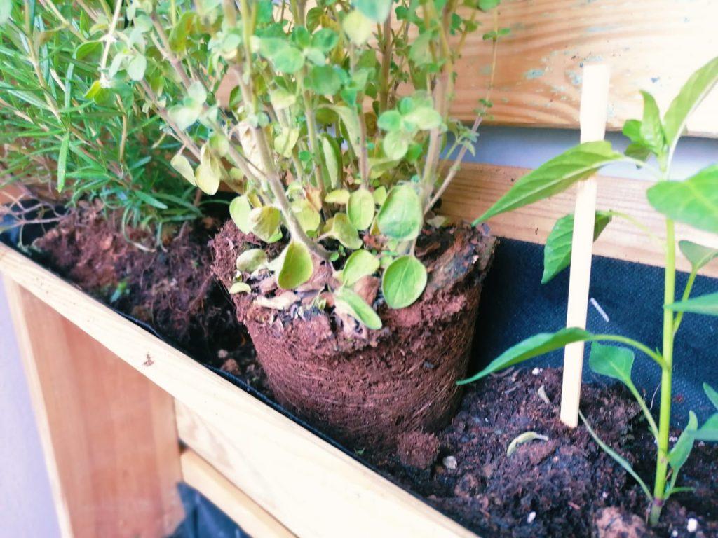 come piantare piante orto verticale